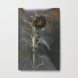 Sunflower #2 Metal Print