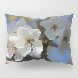 Close Up Of White Cherry Blossom Flowers Pillow Sham