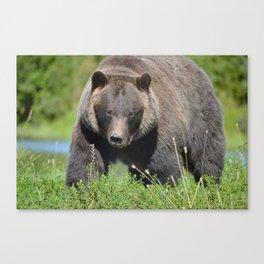 Brown Bear - Alaska Canvas Print