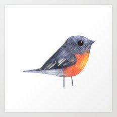 Flame Robin Art Print