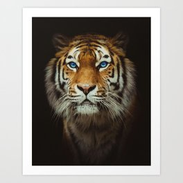 Wild Tiger with Blue eyes Art Print