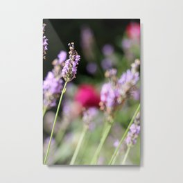 Lavender and rose Metal Print