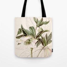 Helleborus orientalis Tote Bag