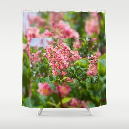 Aesculus red blossom cluster Shower Curtain