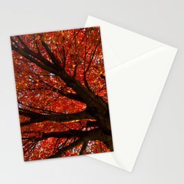 Shimmering Orange: Autumn Maple Tree Nature / Botanical Photograph Stationery Cards
