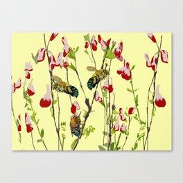 The Blue Banded Bee (Amegilla cingulata) Canvas Print