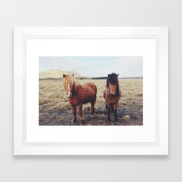 Icelandic Ponies Framed Art Print