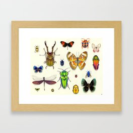 Insecta Framed Art Print