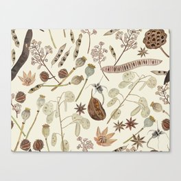 Seed Pods Canvas Print