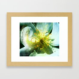 Yellow Rose Center with smokey overlay by CheyAnne Sexton Framed Art Print