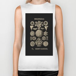 """""""Hexacoralla"""" from """"Art Forms of Nature"""" by Ernst Haeckel Biker Tank"""