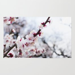 PLUM BLOSSOMS Edition01 Rug