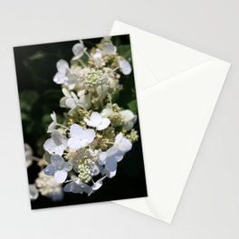 White Blossoms With Raindrops Stationery Cards