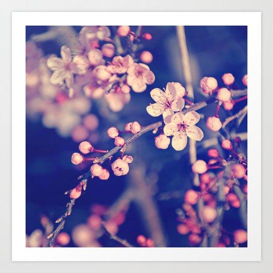 Gentle Rose Cherry Blossom Art Print