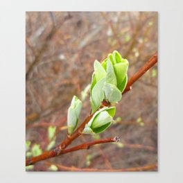 new leaves Canvas Print