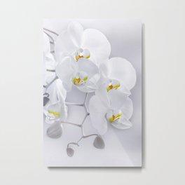 Orchid white macro 029 Metal Print