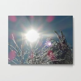 Sun Sparkles Ice Covered Trees Metal Print