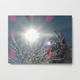 Sun Sparkles Ice Covered Trees Metal Print