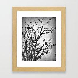 Rustic Crows Black Birds Tree Modern Cottage Chic Art A465B Framed Art Print