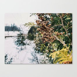 Winter forestry Canvas Print