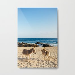 Donkeys on the beach Metal Print