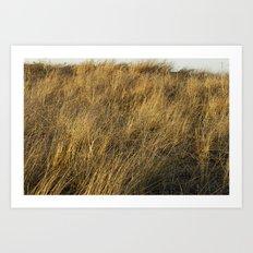Montauk Grass Sand Dunes Art Print