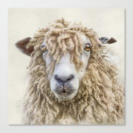 Longwool Sheep Canvas Print