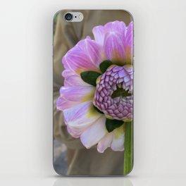 Violet Twin Dahlia iPhone Skin
