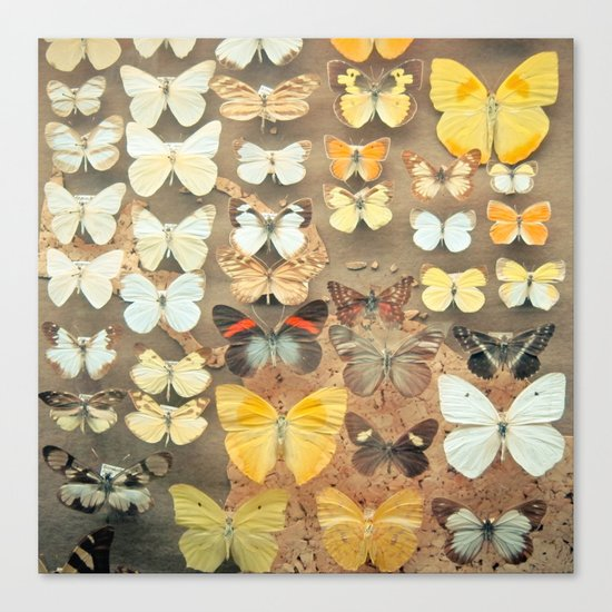 The Butterfly Collection I Canvas Print