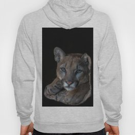 Mountain Lion in Arizona with Black Background Hoody
