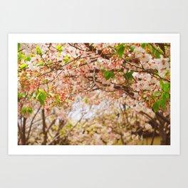 Cherry Blossom (sunny) Art Print