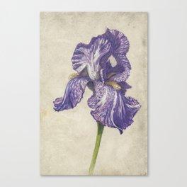 Batik Purple Striped Iris Canvas Print