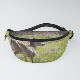 White tail deer in meadow Fanny Pack