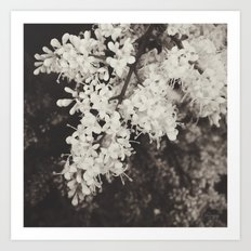A Delicate Presence Art Print