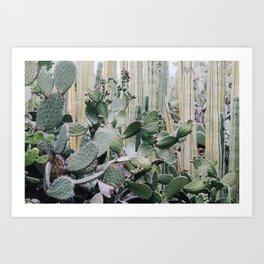 Cacti Heaven Art Print