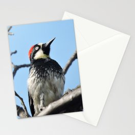 Woodpecker Lookup Stationery Cards