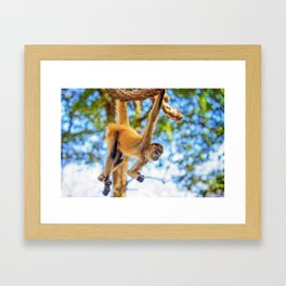 Just Hanging Around Framed Art Print