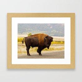 Wandering Yellowstone Bison Framed Art Print