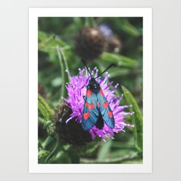Burnet Moth - Nature and Wildlife Photography Art Print