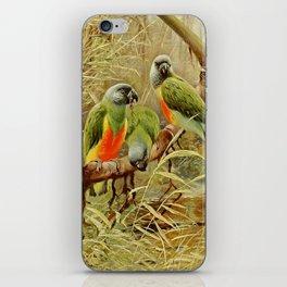 Kuhnert, Friedrich Wilhelm (1865-1926) - Wild Life of the World 1916 v.3 (Senegal Parrot) iPhone Skin