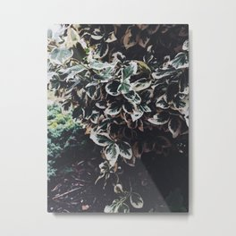 Early Spring in the Winter Metal Print