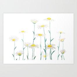 white daisy watercolor horizontal Art Print