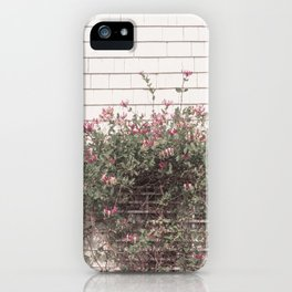 Blooming outside the Green Gables farm house iPhone Case