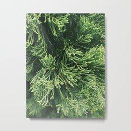 Plantae I Metal Print