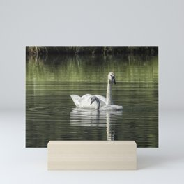 Swan with Cygnet Mini Art Print