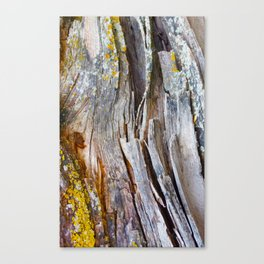Relic of the Forest Canvas Print