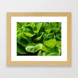 Hosta Leaves Framed Art Print