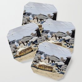 Wildlife in Action Coaster