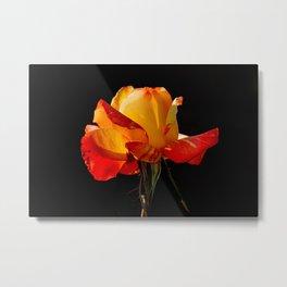 Vibrant Peachy Orange Rose Macro Metal Print