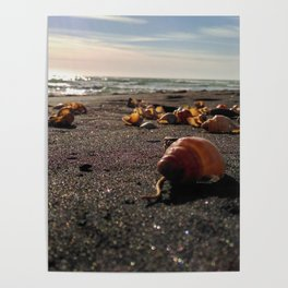 coastline black sand shell new zealand happy feet Poster